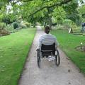 Botanic Garden - Gardens borders and outdoor areas - (2 of 5)