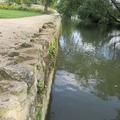 Botanic Garden - Gardens borders and outdoor areas - (4 of 5)