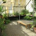 Botanic Garden - Gardens, Glasshouses - (2 of 5) - Conservatory