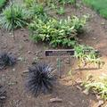 Botanic Garden - Signs and labelling - (2 of 3)