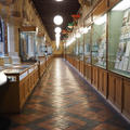 University Museum of Natural History - Gallery spaces - (5 of 5)